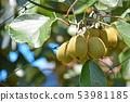 키위의 젊은 열매 53981185