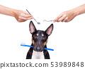 dental toothbrush dog 53989848