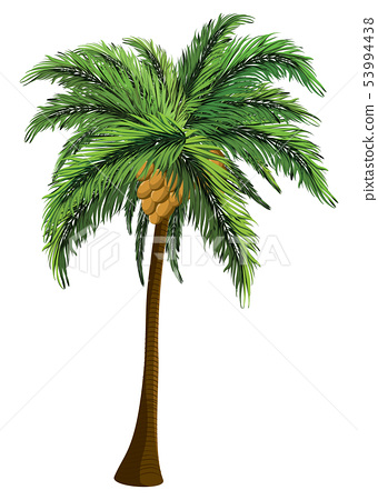 Palm tree with coconut 53994438