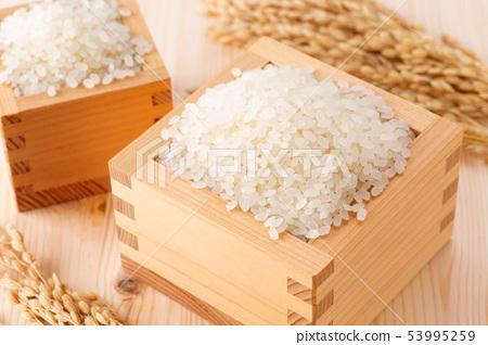 Rice 53995259