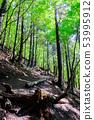 Mt. Buko mountain trail (Omotesando course) 53995912