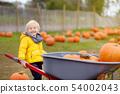 Cute little boy choosing organic pumpkin 54002043