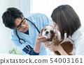 동물 병원 54003161