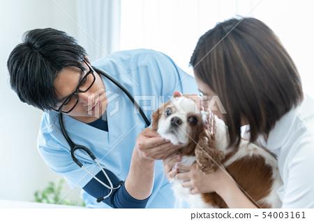 動物醫院 54003161