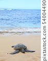 Sea turtle at Laniakea Beach 54004490
