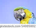 아름다운 루리 잉꼬 54005602