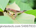 나뭇잎 위에 카나헤비 한마리 54007033