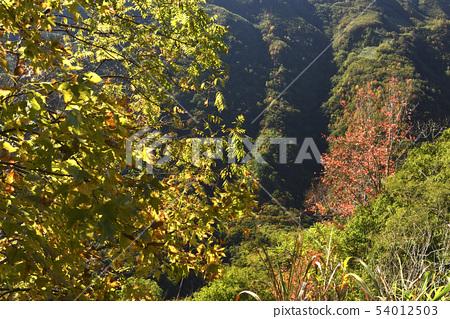 秋天森林山谷的顏色 54012503