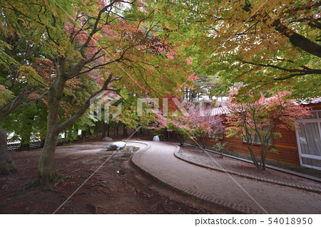 Fushoushan Songlu, Fushoushan 농장, Songsong, 메이플 리프, 메이플 레드, 대중 도시, Heping 지구 54018950