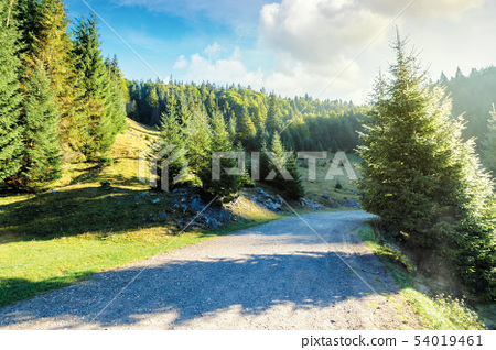 old country road through forest at sunrise 54019461
