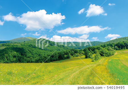 countryside summer landscape with field 54019495