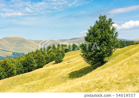 one tree on the meadow in high mountain landscape 54019557