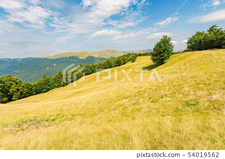 one tree on the meadow in high mountain landscape 54019562