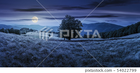 beech tree on the meadow in mountains at night 54022799