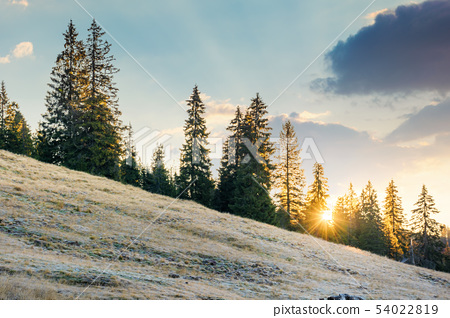 rising sun behind the spruce trees on the hill 54022819