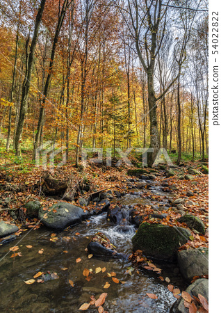 refreshing stream in the autumn forest 54022822