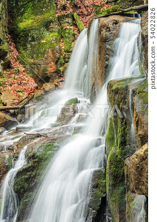beautiful forest waterfall scenery 54022826