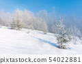 winter scenery with trees in hoarfrost 54022881