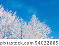 winter scenery with tree in hoarfrost 54022885