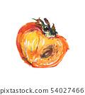Watercolor persimmon 54027466