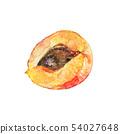 Watercolor apricot 54027648
