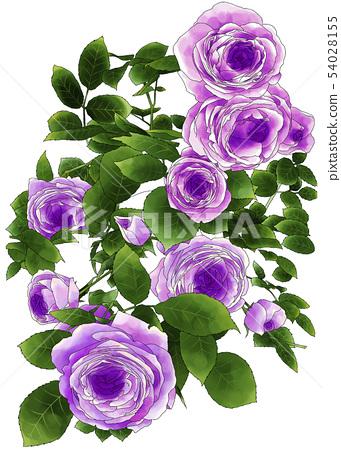 紫玫瑰2 54028155