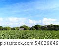 밭 (초여름) 54029849