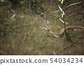 見沼 공원의 자연 54034234