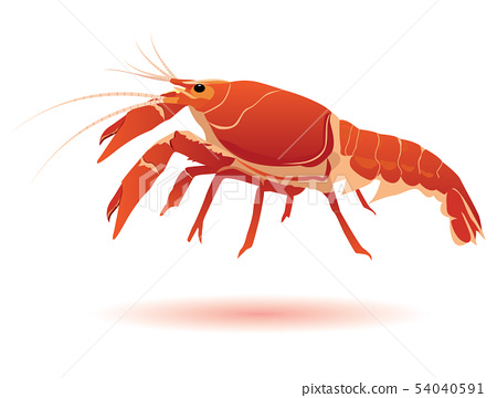 the lobster vector design 54040591