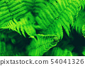 Green fern leaves. 54041326