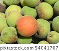 我收获了加贺李子水果。 54041707