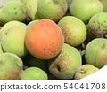 我收获了加贺李子水果。 54041708