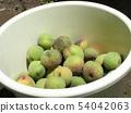 我收获了加贺李子水果。 54042063