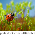 Ladybird going to fly 54043663