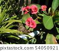 Hanakilin将花朵贴在像长颈鹿一样苗条的身上 54050921