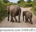 Two Elephants Walk Away Across a Road 54061851