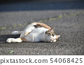 A cat relaxing in the garden (9 years old) 54068425