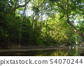 River in forest and sunlight through leaves 54070244
