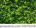 Green leaves natural wall background texture. 54070248
