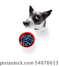hungry dog with vegan healthy fruit 54076633