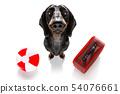 summer vacation holiday dog 54076661