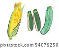 옥수수와 호박 여름 야채 일러스트 54079250