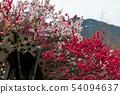 Sunset flower petals 54094637