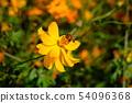 花和蝴蝶 54096368