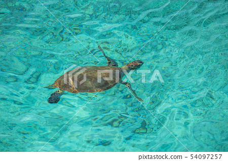 Swimming with Turtles on the Caribbean Island of Curacao 54097257