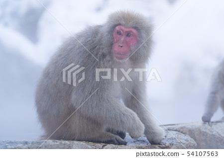 일본 원숭이지고 쿠 다니 온천 54107563