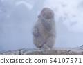 일본 원숭이지고 쿠 다니 온천 54107571