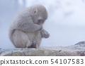일본 원숭이지고 쿠 다니 온천 54107583