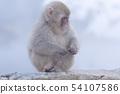 일본 원숭이지고 쿠 다니 온천 54107586