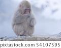 일본 원숭이지고 쿠 다니 온천 54107595